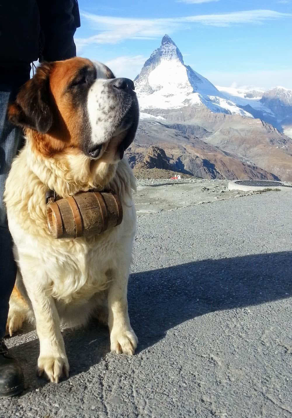 Doge switzerland